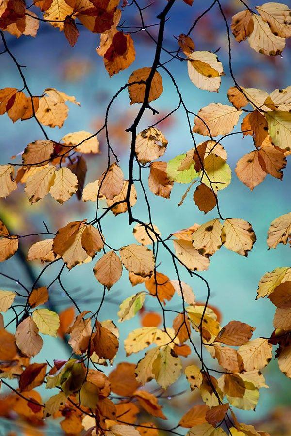遇见秋天 静在心里,