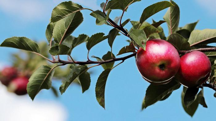 水果漲價影響幾何?